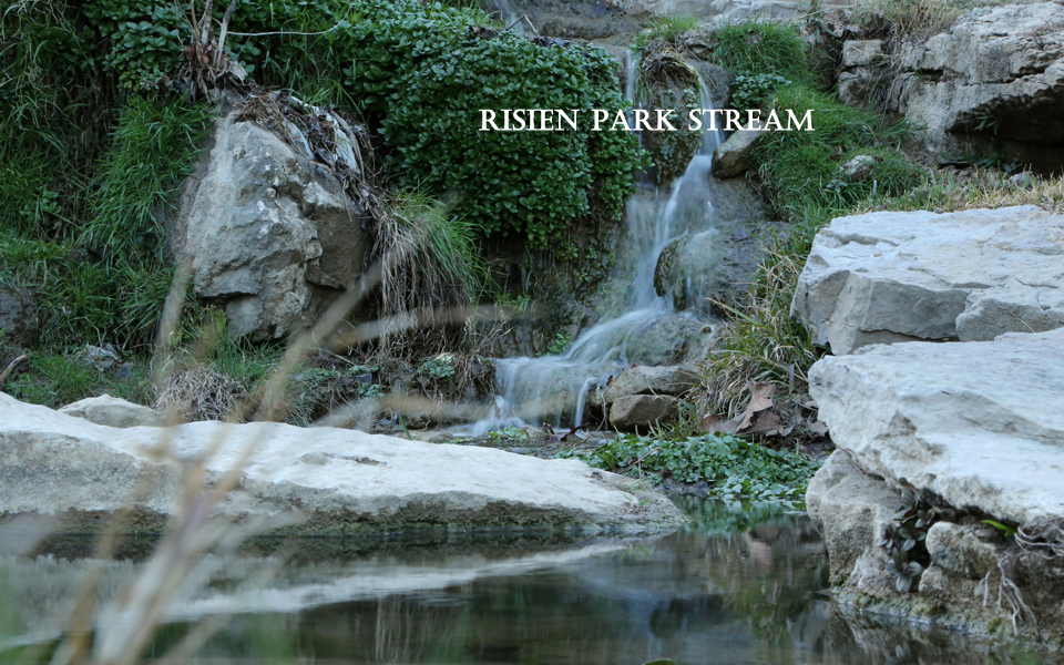 Risien Park